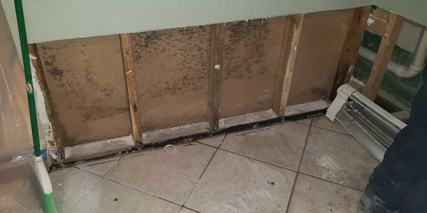 mold in a chicago home